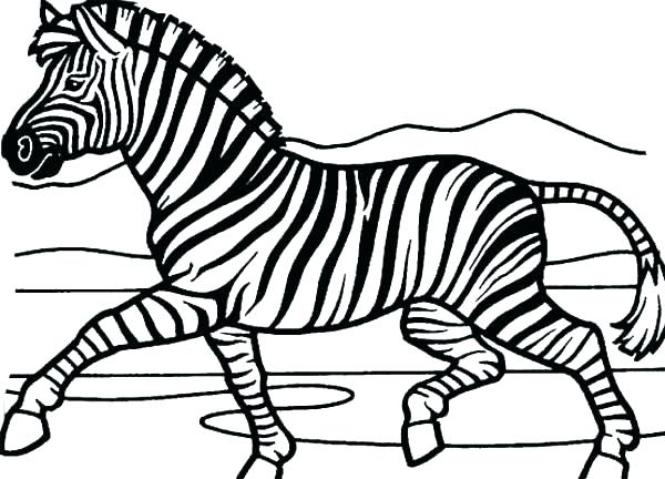 600x432 Zebra Printable Coloring Pages Special Zebra Coloring Page Free