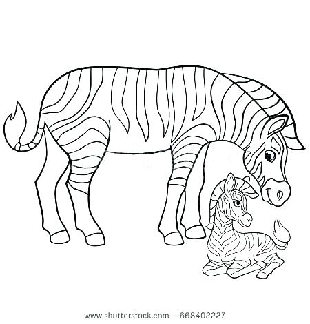 450x470 Zebra Coloring Pages