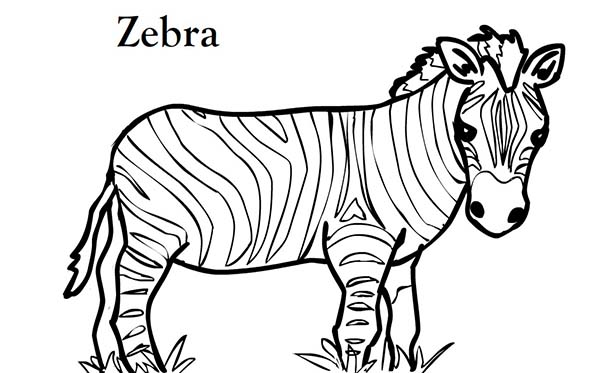 600x373 Coloring Pages Zebra Zebra Printable Coloring Pages Cecilymae