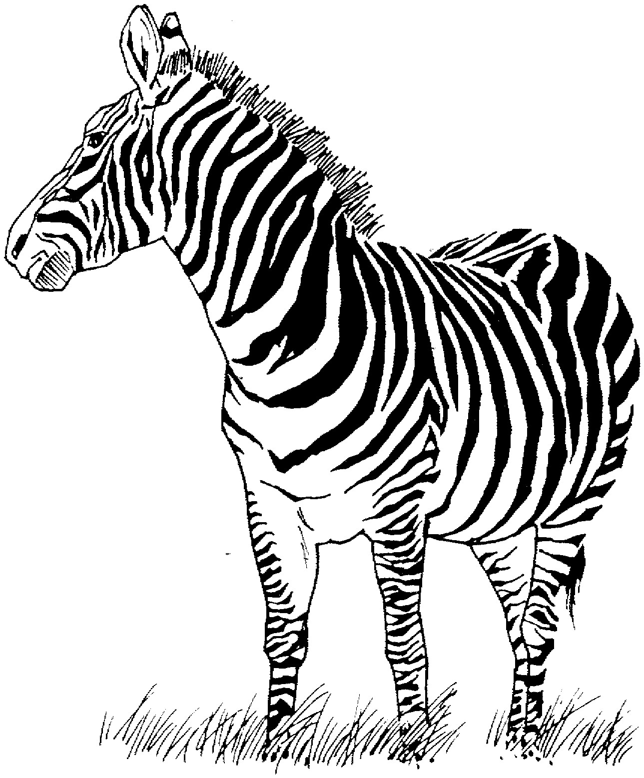 1289x1557 Lovely Coloring Pages Zebras