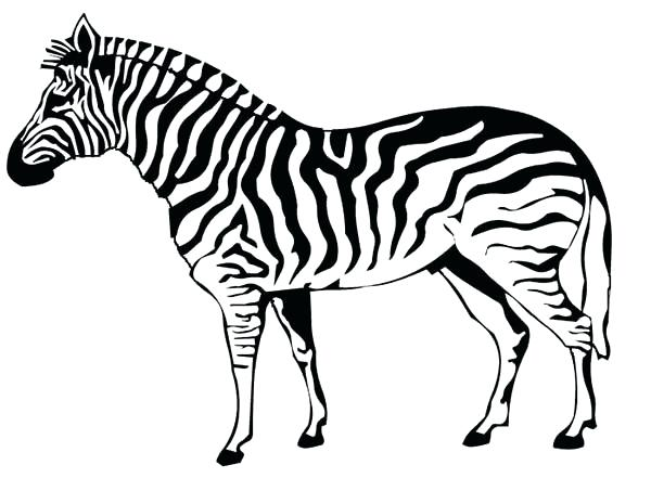 600x453 Zebra Also Click To See Printable Version Of Zebra Coloring Page