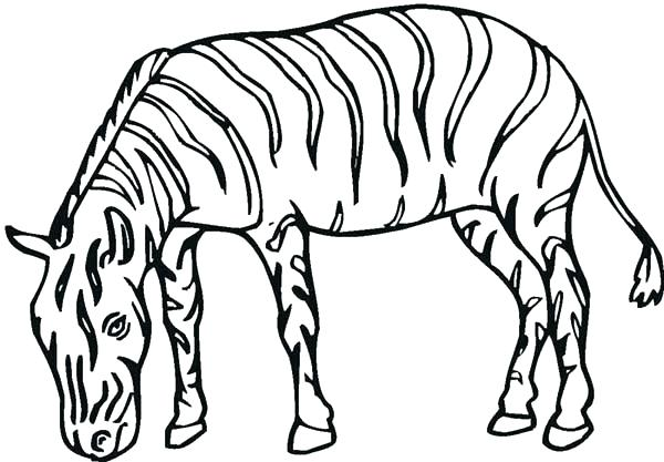 600x417 Zebra Printable Coloring Pages Zebra Coloring Pages Free Printable