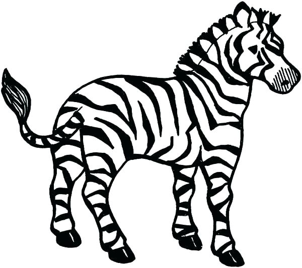 600x533 Zebra Without Stripes Coloring Pages Free Zebra Color Sheet
