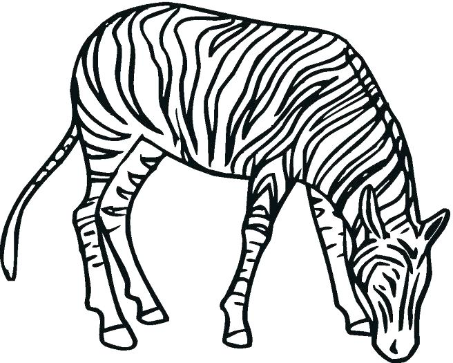 656x525 Zebra Printable Coloring Pages