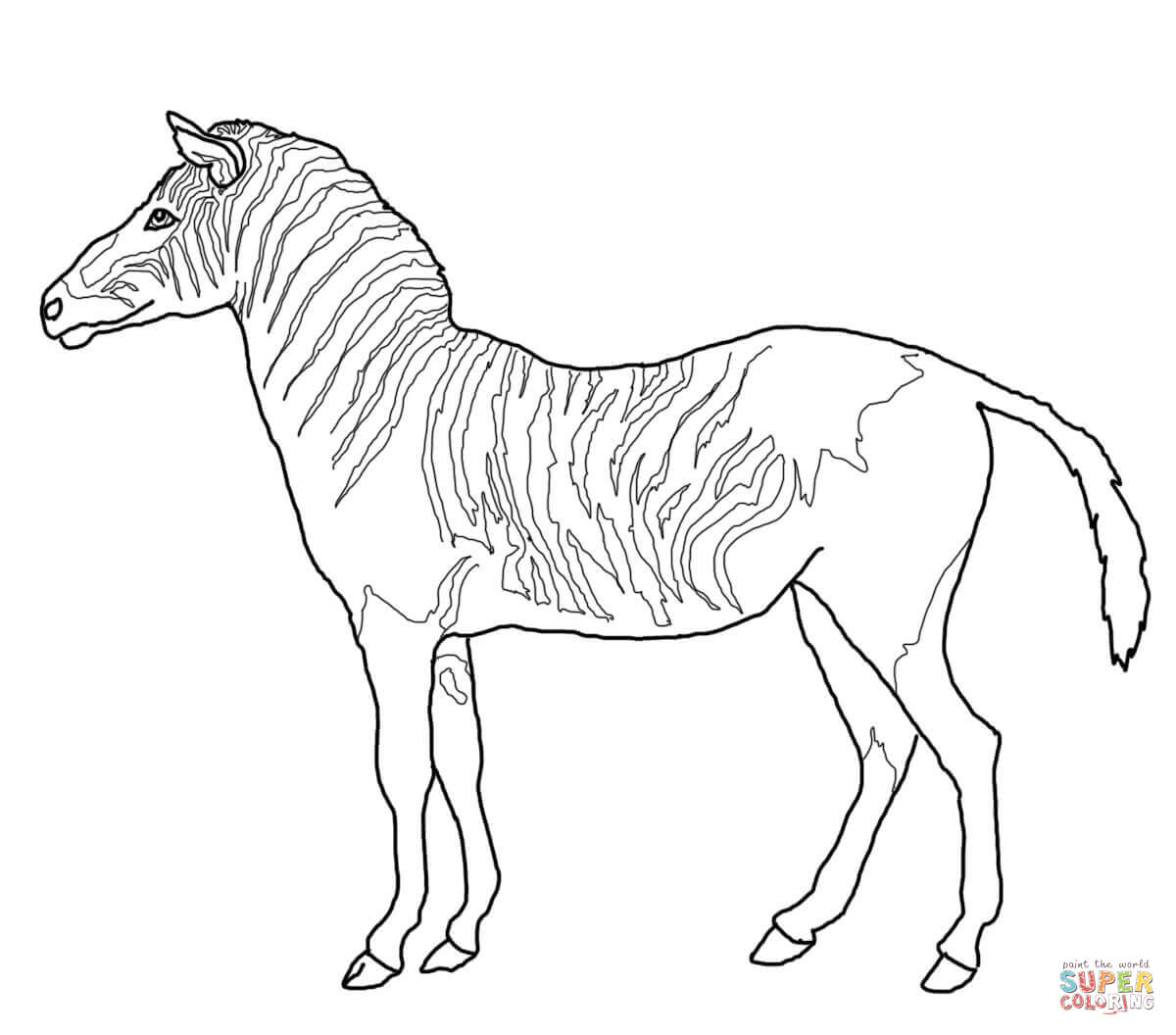 Zebra Coloring Pages Printable At Getdrawings Com Free For