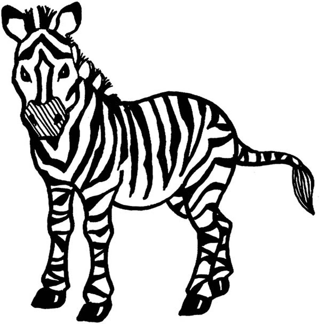 1050x1062 Sampler Zebra Picture To Color Nice Coloring Page Best Book Id