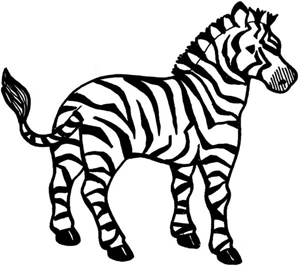 600x533 Zebra Coloring Pages Printable