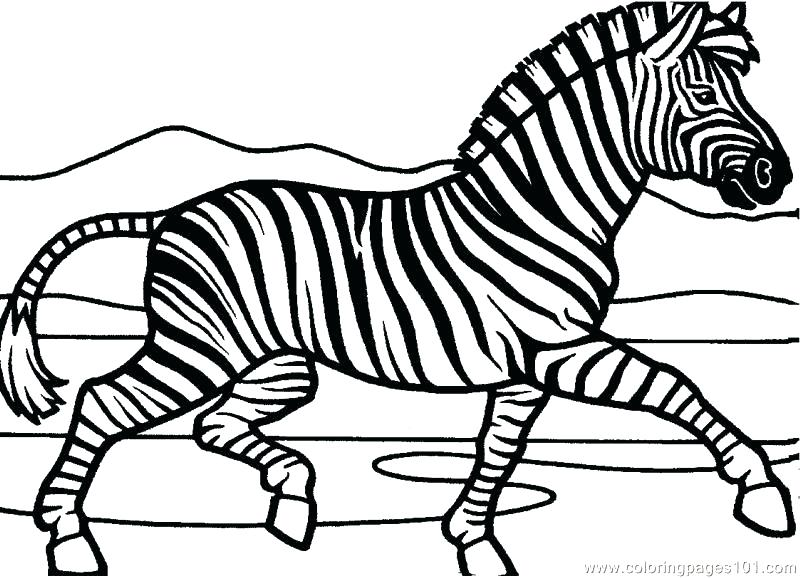 800x578 Zebra Coloring Pages Zebra Coloring Picture Zebra Coloring Page