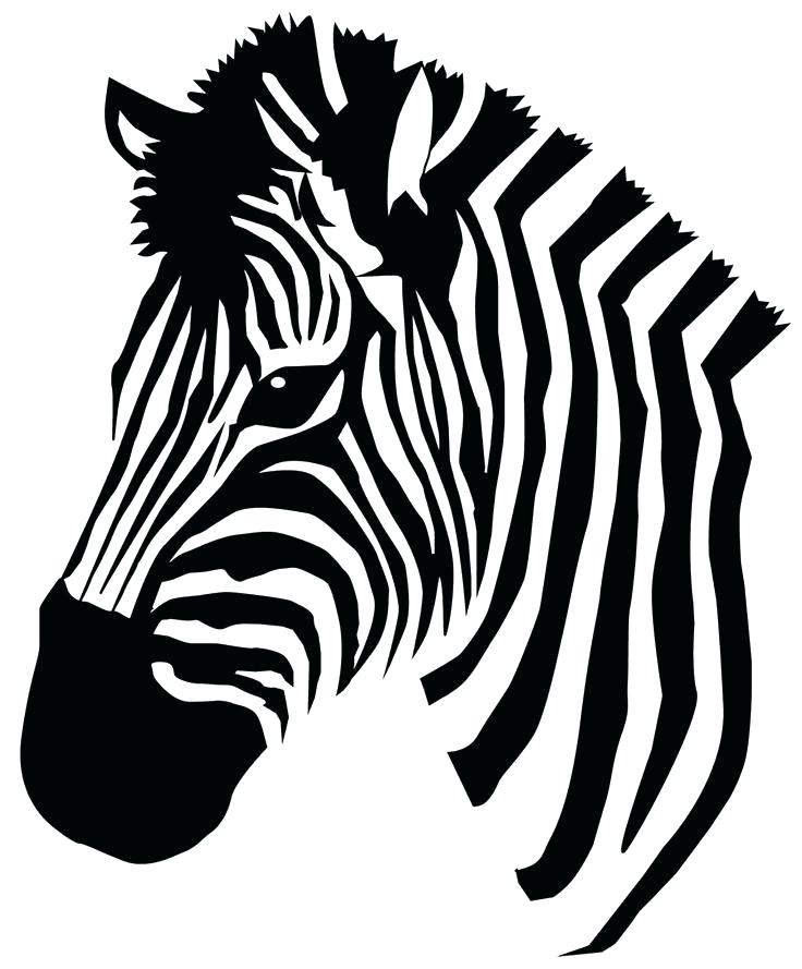 736x889 Zebra Pictures To Color Zebras Color Cute Zebra Backgrounds Zebra