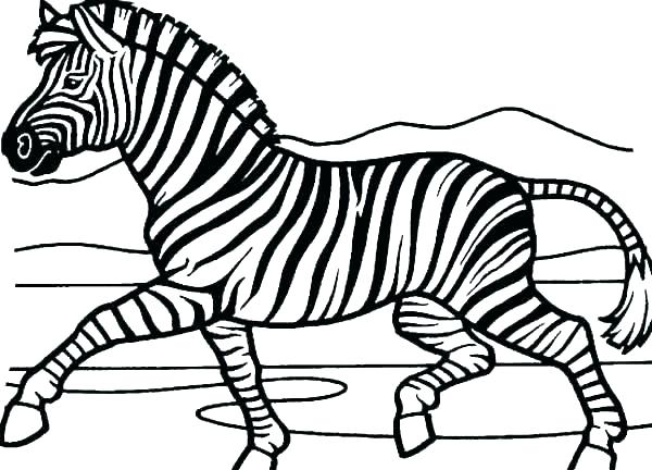 600x432 Zebra Coloring Page Zebra Coloring Page Zebra Coloring Pages
