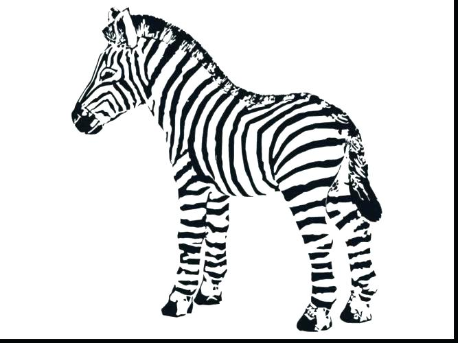 667x500 Zebra Without Stripes Coloring Pages Free Toad Page Animal
