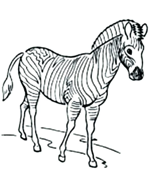 600x736 Zebra Coloring Page Zebra Printable Coloring Pages Awesome Zebra