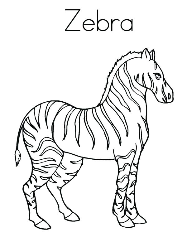 600x776 Zebra Coloring Page Zebra Zebra Coloring Page Coloring Page Animal
