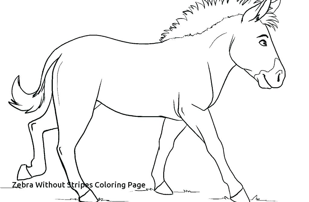 1024x669 Zebra Coloring Pages