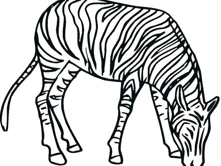 440x330 Coloring Page Of A Zebra Zebra Coloring Pages Without Stripes Kids