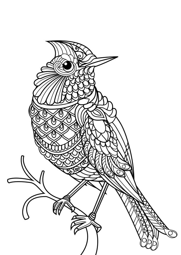 736x1040 Animal Coloring Pages Pdf Beautiful Best Adult Colouring