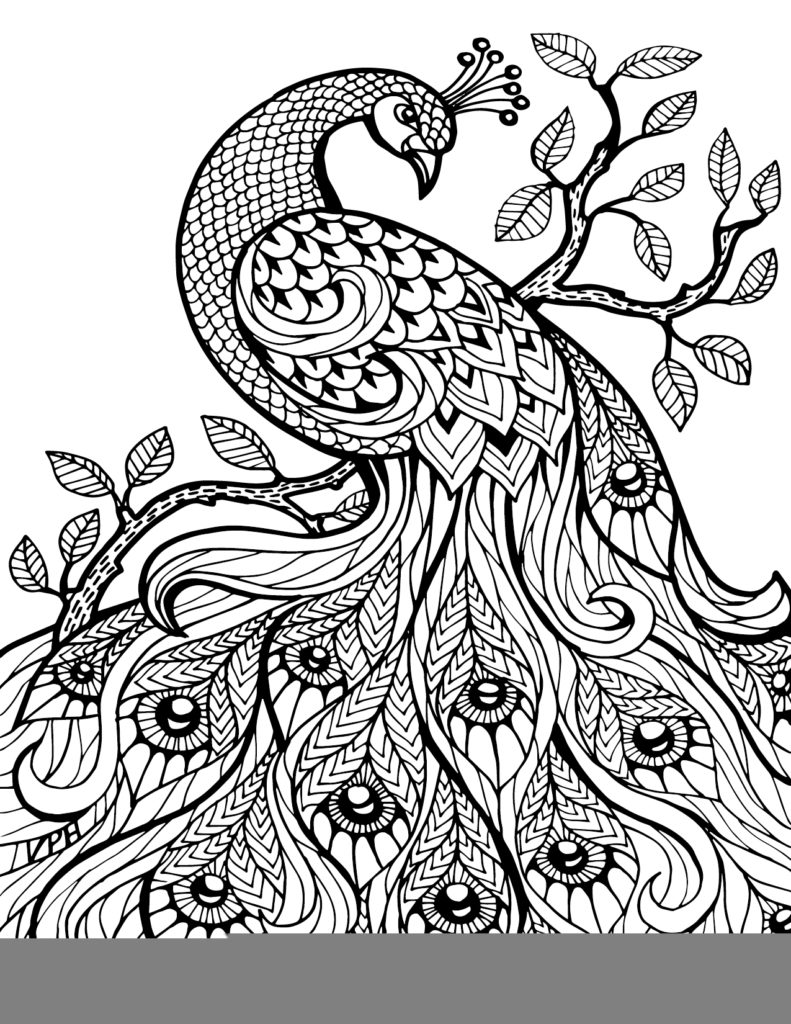 791x1024 Coloring Pages Zentangle And Adult Coloring On Zentangle Adult