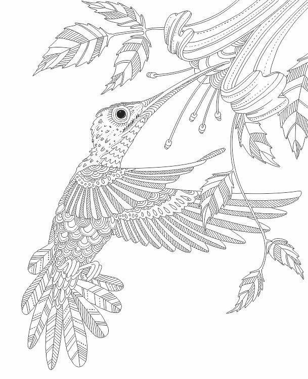 609x751 Hummingbird Zentangle Coloring Pages Colouring Adult Detailed