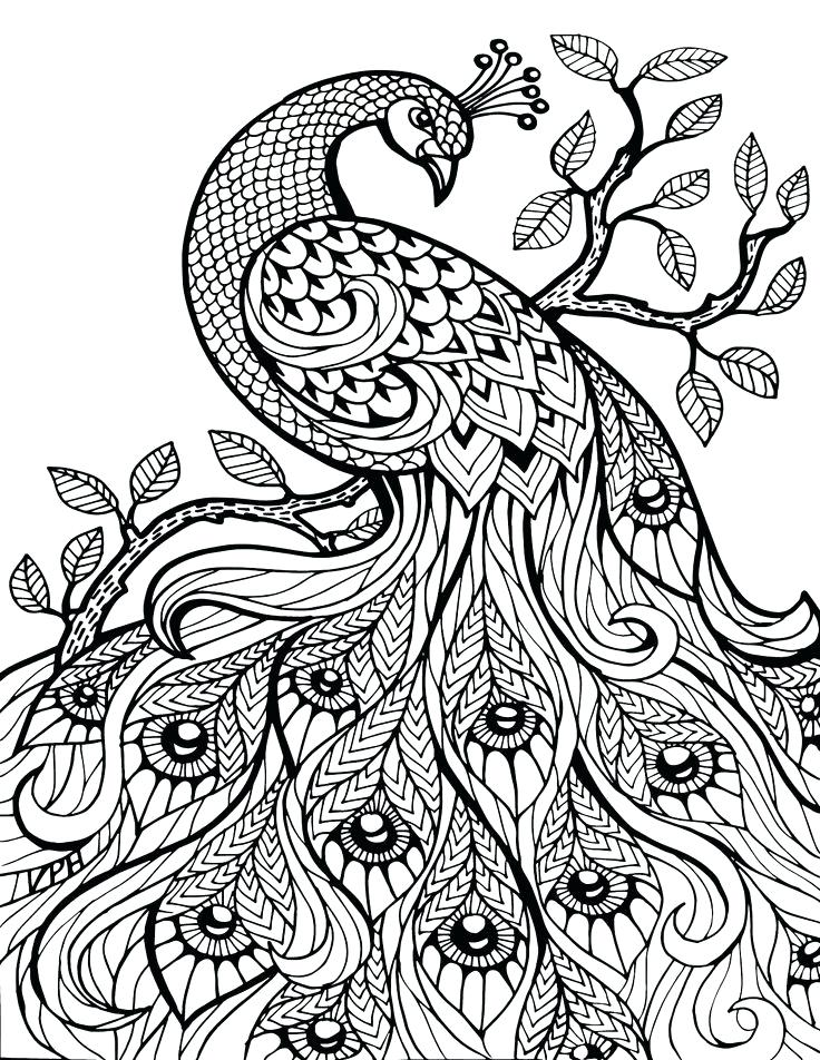 736x952 Zentangle Pictures To Color