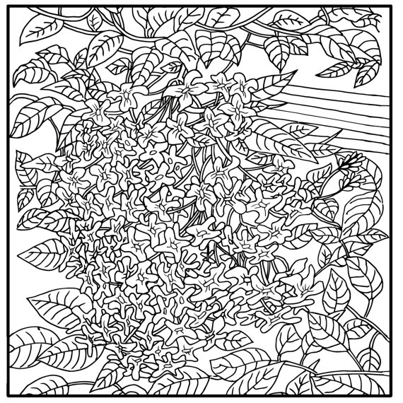 570x570 Printable Coloring Page Zentangle Flowers Coloring Book