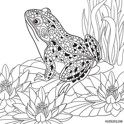 500x500 Zentangle Frog Sitting Among Lotus Flowers, Water Lilies Coloring