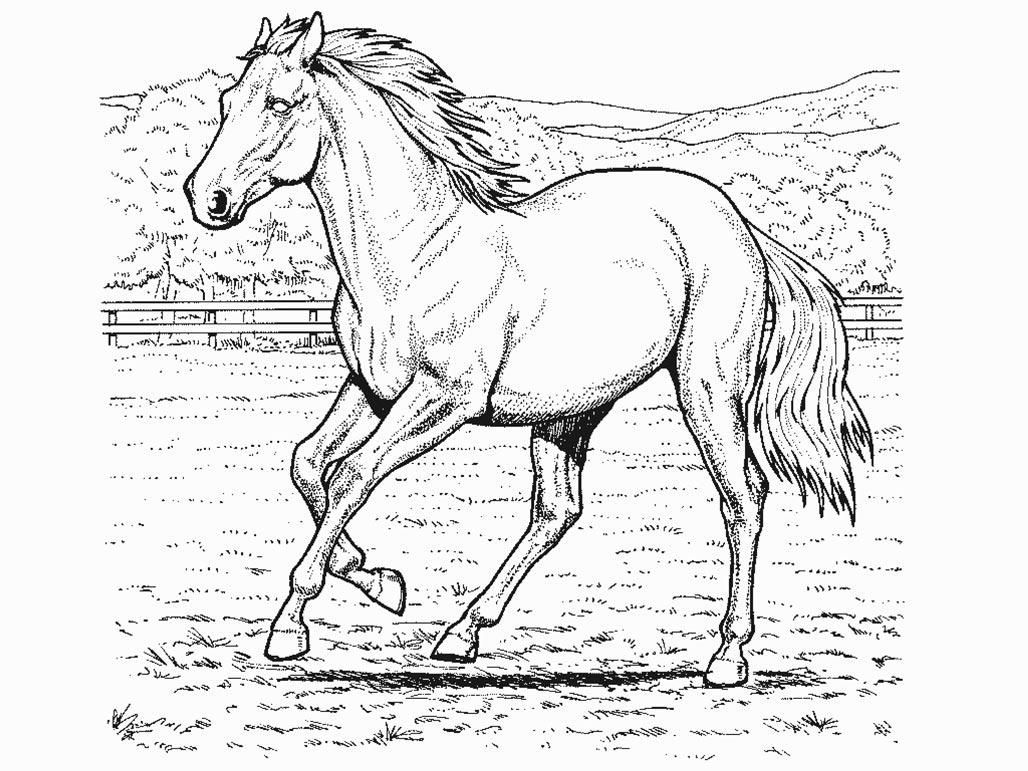 1028x771 Horse Coloring Page Realistic Animals, Butterflies, Birds Etc