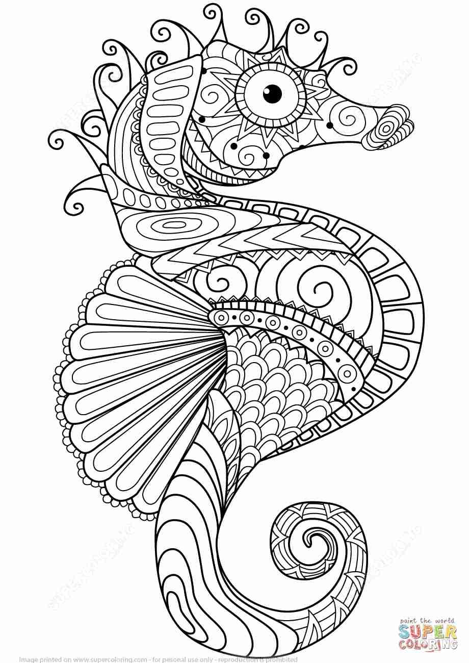 920x1300 Sea Horse Coloring Page Olegratiy