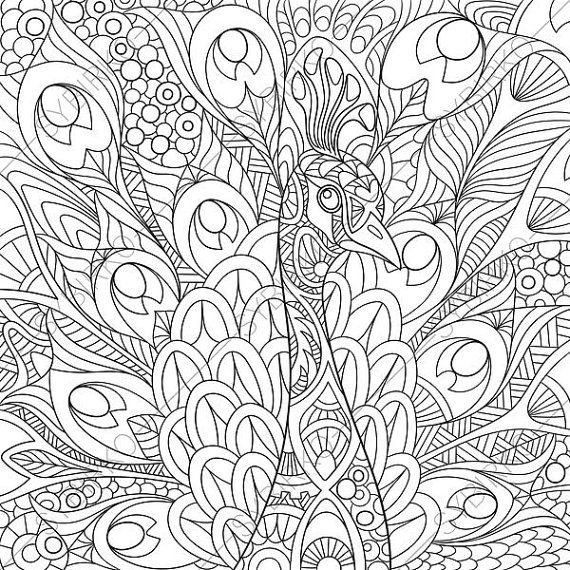 570x570 Adult Coloring Page Peacock Zentangle Doodle Coloring Pages