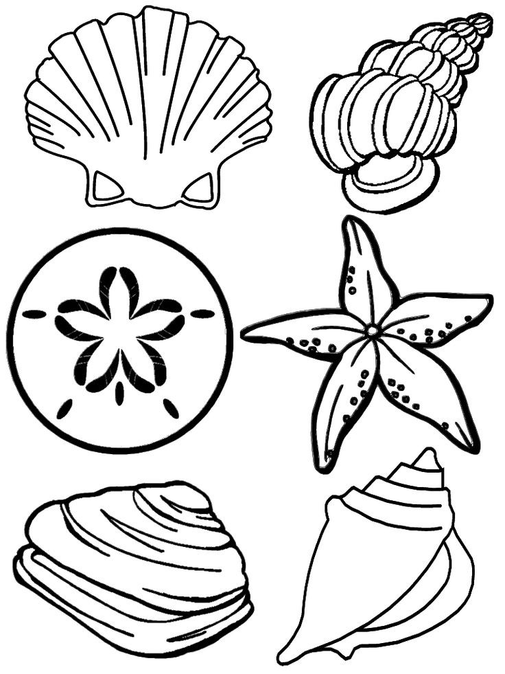 736x981 Clam Shell Coloring Page Luxury Best Rocks Shells For Mike