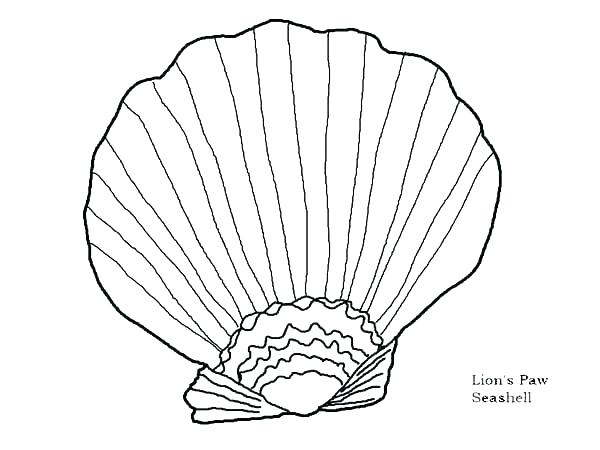 600x450 Sea Shell Coloring Pages A Lovely Zigzag Scallop Seashell Drawing