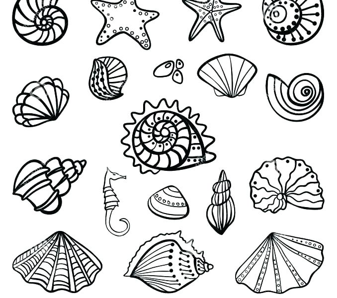 678x600 Sea Shells Coloring Pages Seashell Coloring Pages Seashells