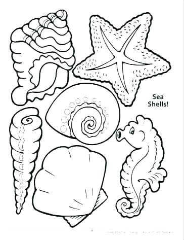 364x473 Sea Shells Coloring Pages Seashell Drawing Lovely Zigzag Scallop