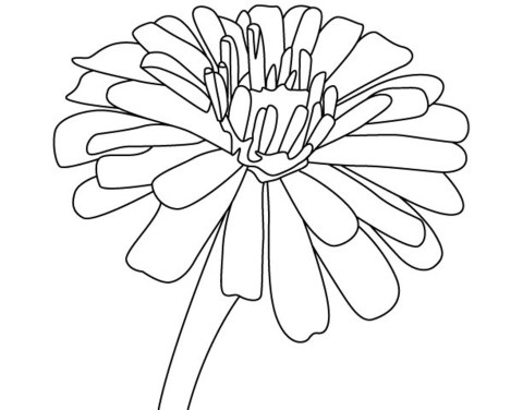 480x376 Free Zinnia Flower Coloring Pages Morning Glories, Sunflowers