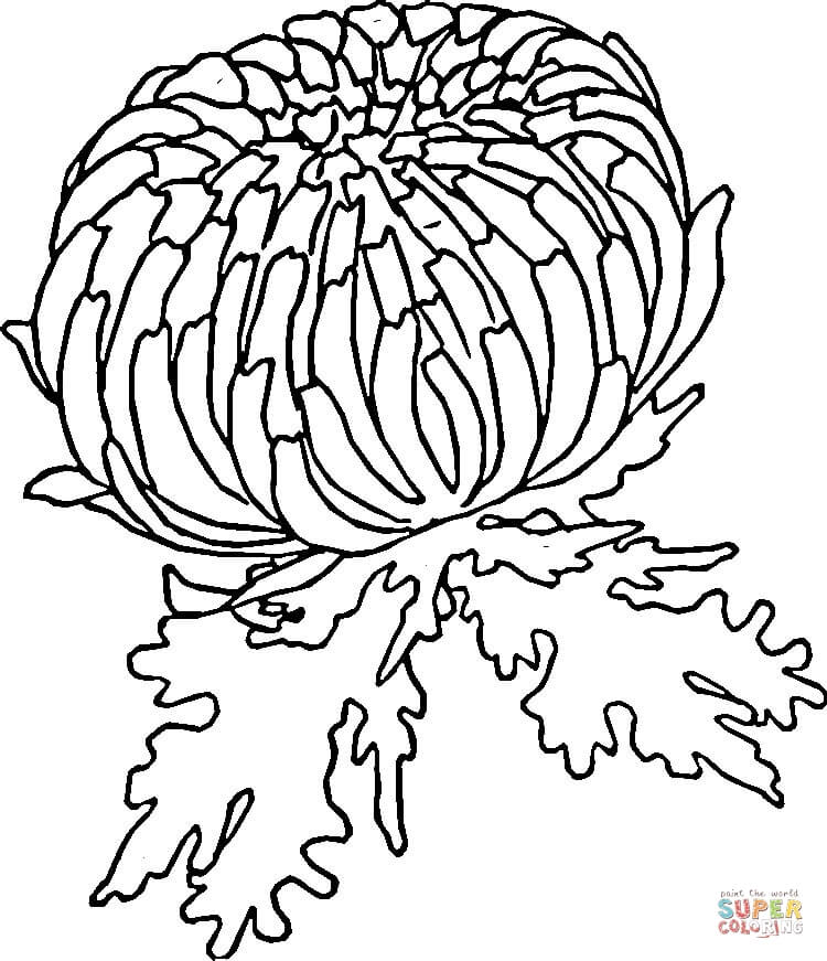750x871 Red Zinnia Flowering Coloring Page
