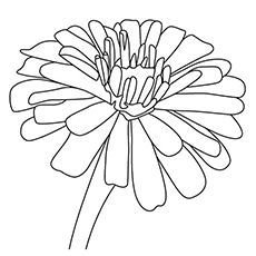 230x230 Top Free Printable Flowers Coloring Pages Online Zinnias