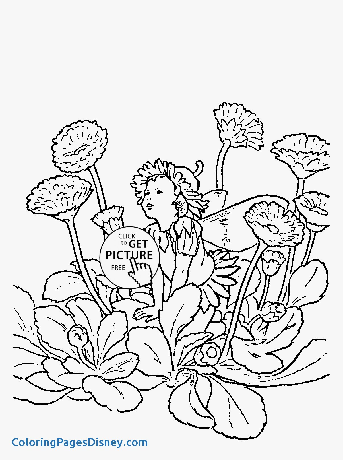 1206x1617 Zinnia Coloring Pages Lovely Flower Fairy Double Daisy Coloring