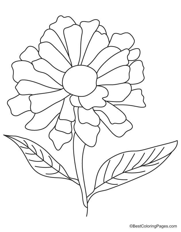 630x810 Zinnia Flower Coloring Pages Sketch Coloring Page, Flower Coloring