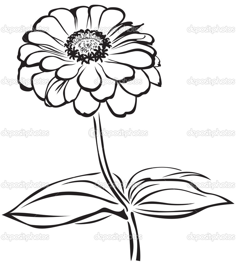 910x1024 Zinnia Flower Drawing Zinnia Flower Coloring Page Free Printable