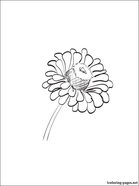 560x750 Zinnia Coloring Page To Print Out Coloring Pages