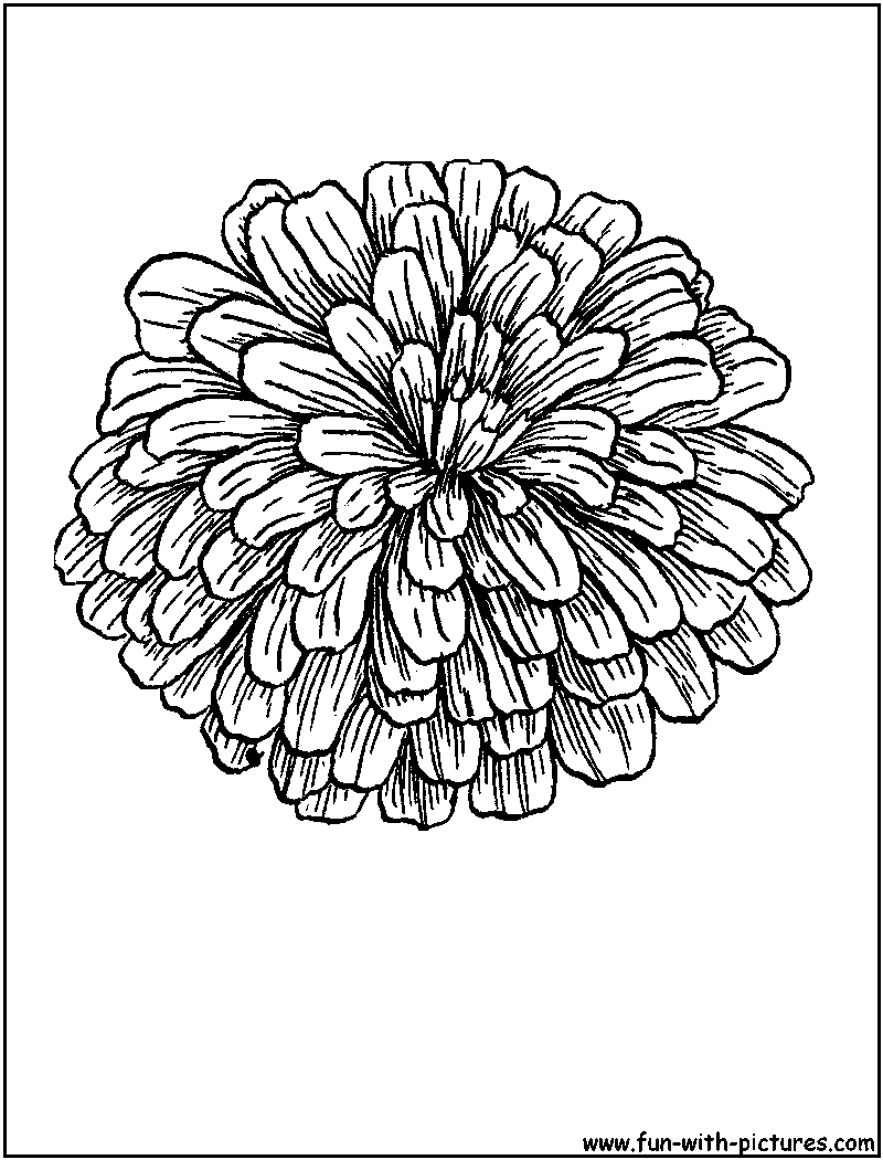 800x1050 Coloring Sheet Of Zinnias Zinnia Coloring Page Coloring Sheets