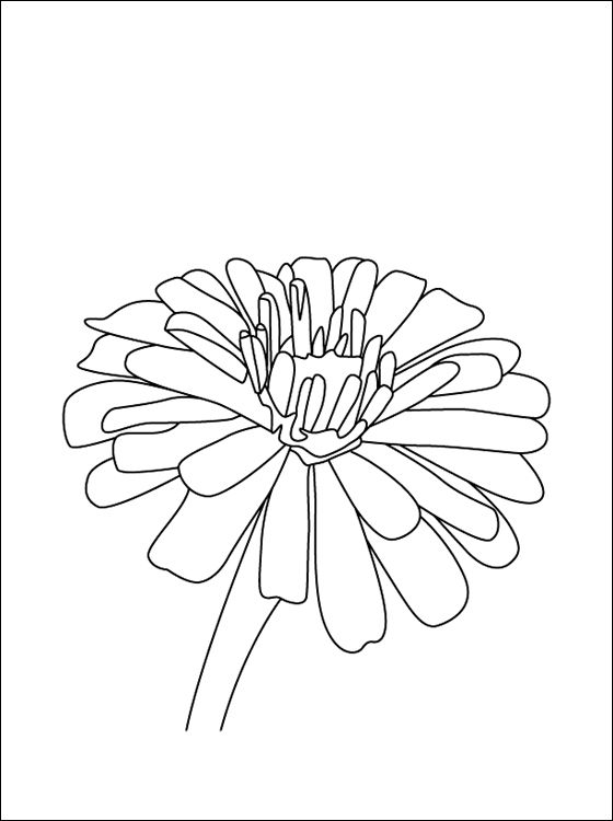560x750 Flower Page Printable Coloring Sheets Zinnia Coloring Page