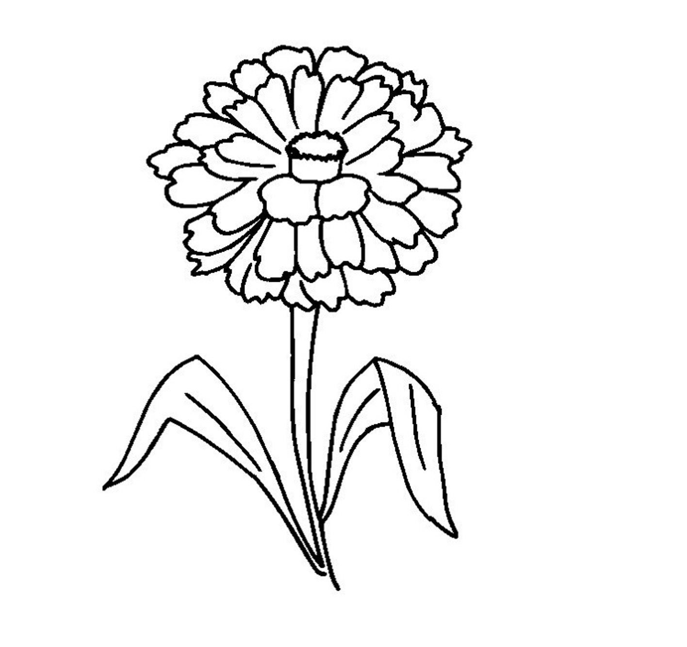 1416x1334 Amazing Zinnia Coloring Page Printable Pic Of Flower Concept