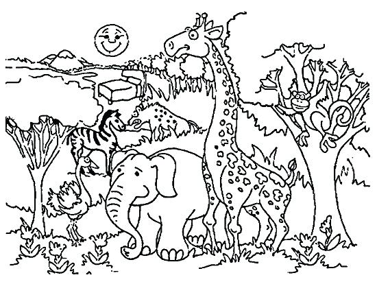 550x414 Zoo Coloring Pages Zoo Coloring Pages Zoo Animals Coloring Pages