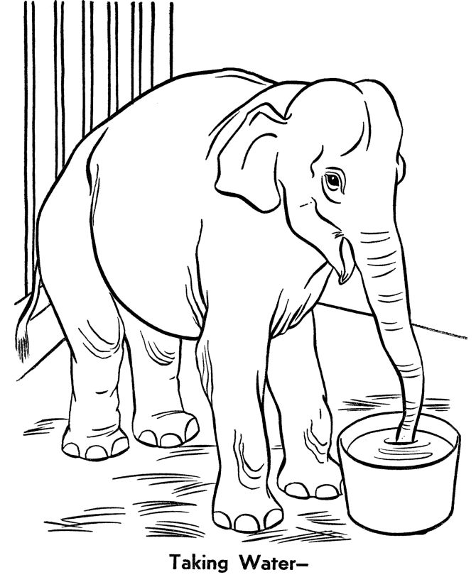 Zoo Animal Coloring Pages For Preschool at GetDrawings ...