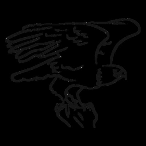 Bald Eagle Flying Sketch Vector