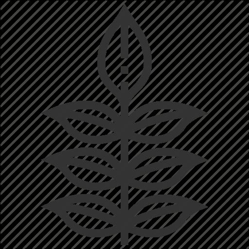 Ash, Leaf, Leaves, Nature, Plant Icon
