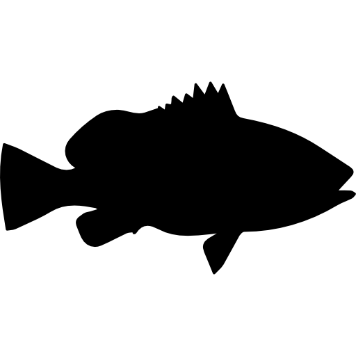 Fish Shape Of Nassau Grouper Icons Free Download