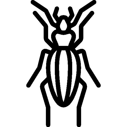 Beetle Symbol Icon