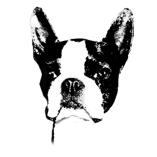 Ras Norsk Boston Terrier Klubb