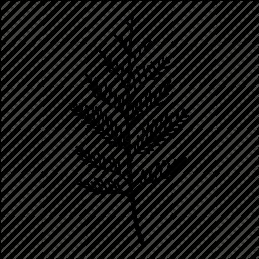 Cedar, Conifer, Frond, Leaf, Nursery, Ornamental Icon